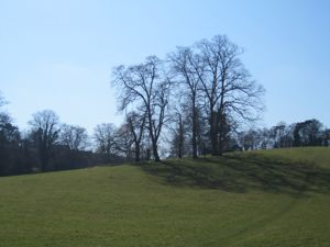 Small copse of trees on green hill, slightly in silhouette from the sun behind.