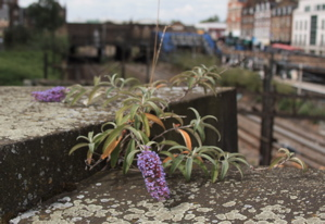 Flower growing out of brick bridge, overlooking railway