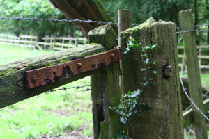 Rotting wooden gate, with rusting iron hinge