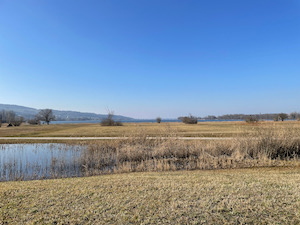 View over wetlands to Greifensee under a blue sky