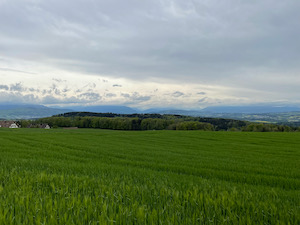 Crop fields under grey cloudy sky. Mountains half obscured in the background.