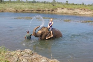 Jules getting a shower from an elephant