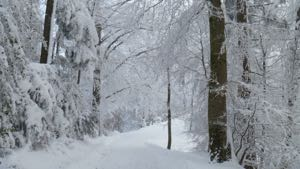 Snow covered trees framing snow covered path