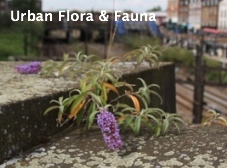 Link to Urban Flora & Fauna